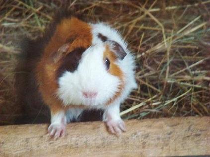 Costa Rica Animal Rescue