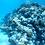 Belize Marine Conservation & Diving3