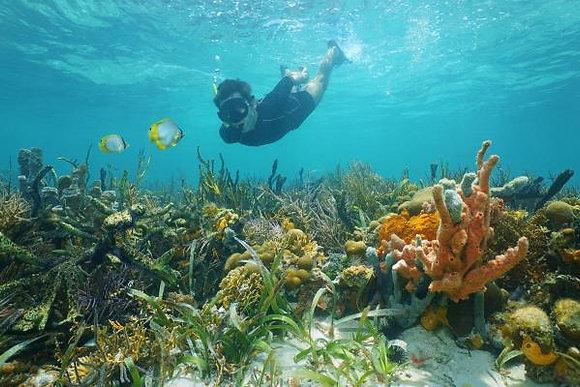 Belize Manatee Conservation1