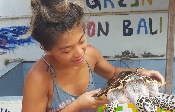 Indonesia - Bali Sea Turtle Rescue1