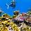 Thumbnail: MAGNETIC ISLAND ESCAPE