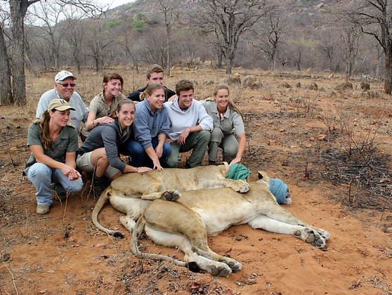 Africa Wildlife Monitoring and Conservation1