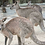Thumbnail: Australia - Wild Animal Sanctuary