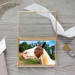 horseDesign_Aglow_Glass_Box_004_edited.j