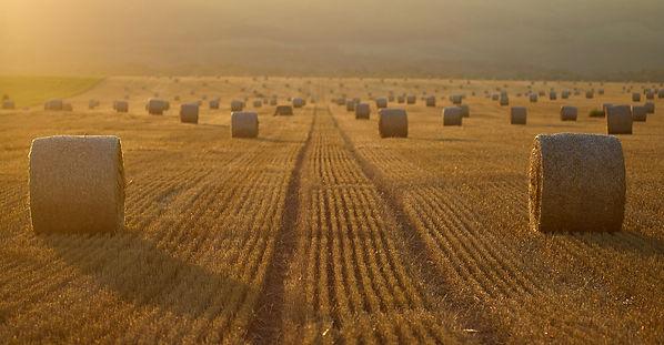 Branche Landwirtschaft Verpackungen Agrarstrechfolie