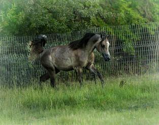Equine Color Genetic Basics