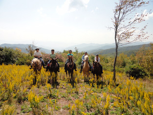 Hags on Nags and Arabian Trail Horses with Roz Gilbert