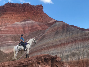 Arabians: The Ultimate Trail Horse