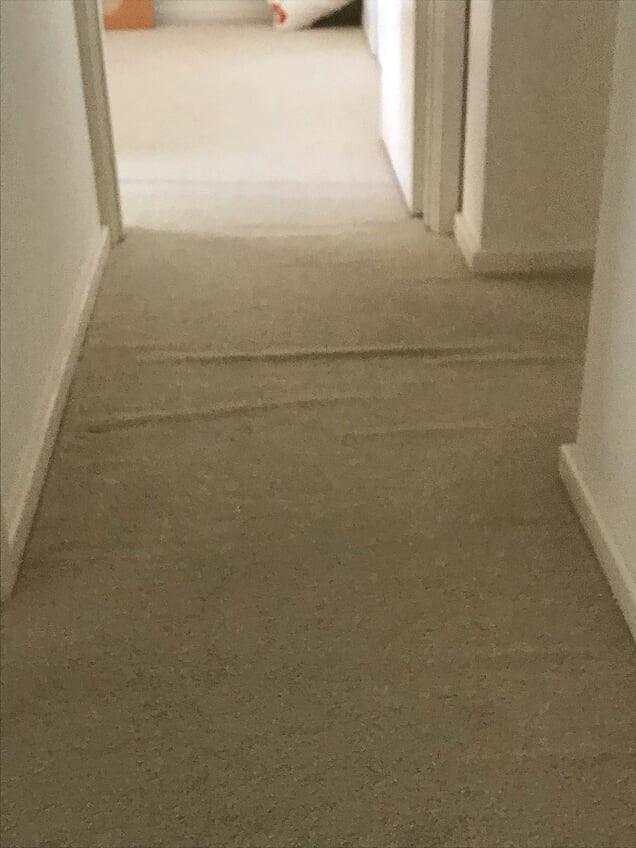 Top Level carpet