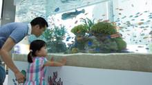 「48th Sony Aquarium」に東京 島のわ通信は協力しています。