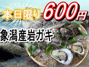 象潟産岩ガキ本日限り600円!!