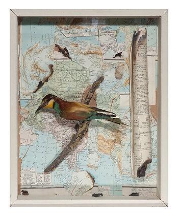 BERTIEN'S BIRD