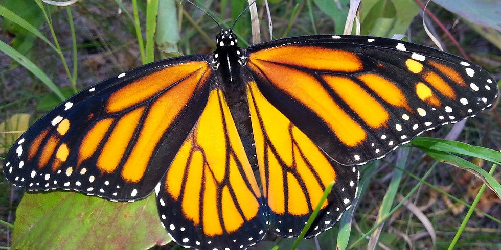 Monarch Butterfly Natural Preserve Tour