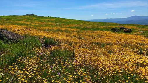 CRidge Wildflowers.jpeg