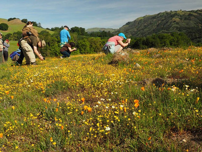 Super bloom - South Bay Wildflower Chasers 2019