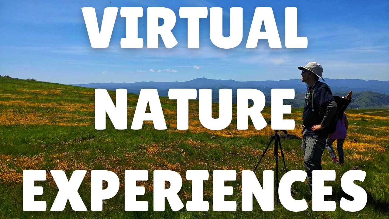 Virtual Nature Experiences