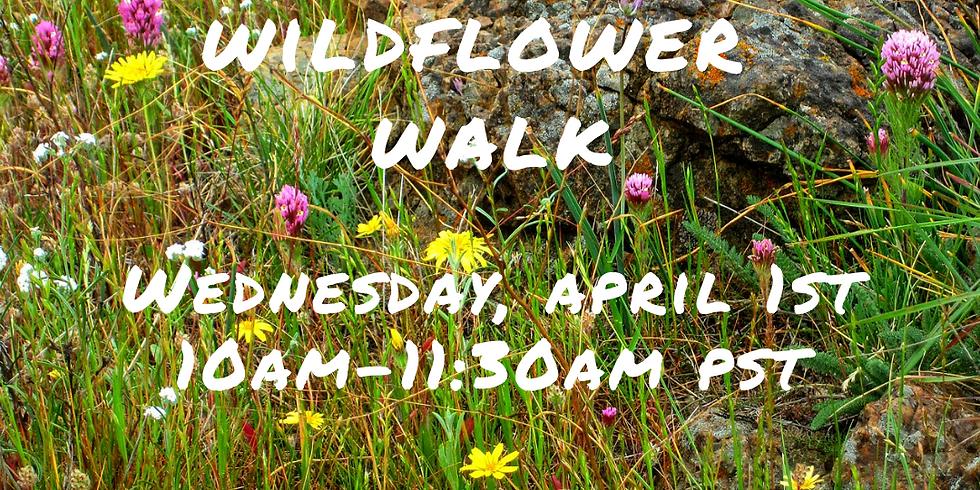 A Virtual Wildflower Walk
