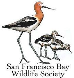 sf bay wildlife socity new.jpg