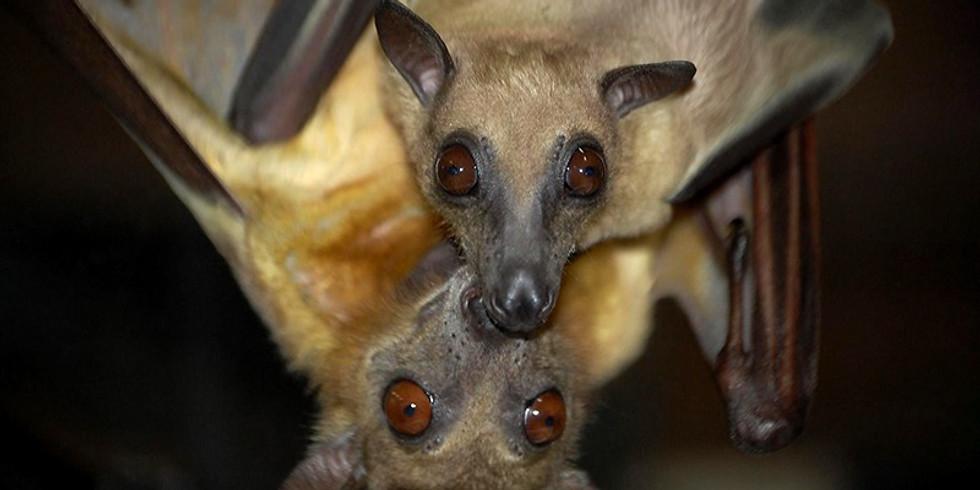 Live Bat Presentation