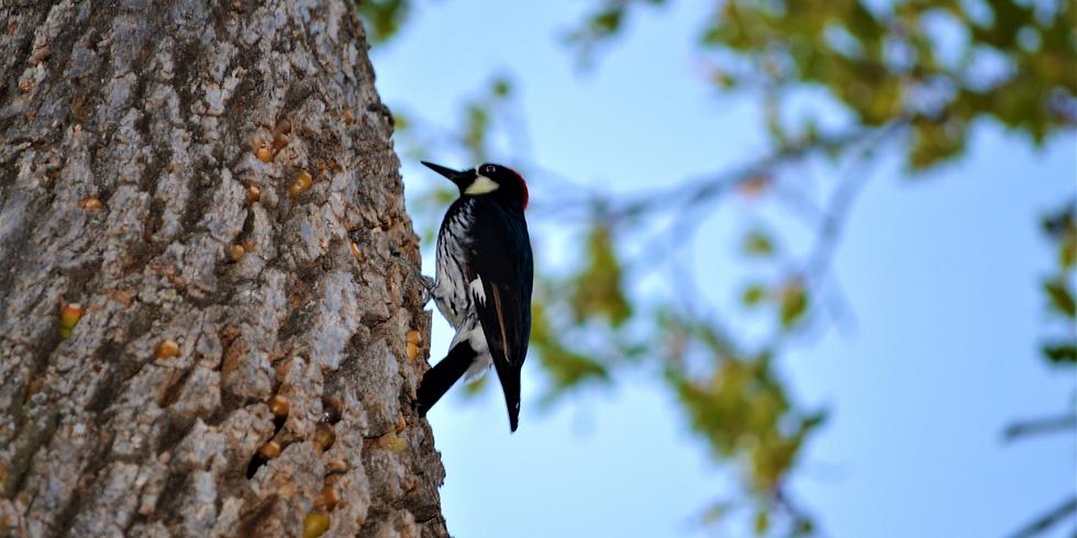 Seasons of the Southern Coast Range and Birds!