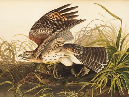 John James Audubon: People of the Parks Past Series #7