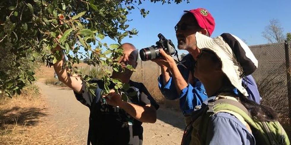 Hellyer County Park Spring 2019 Bioblitz - City Nature Challenge