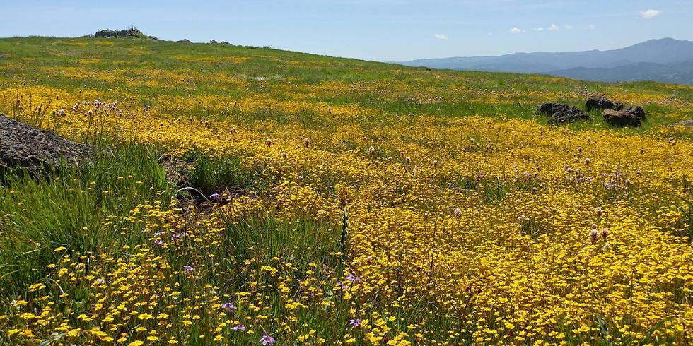 A Live Streamed Wildflower Walk