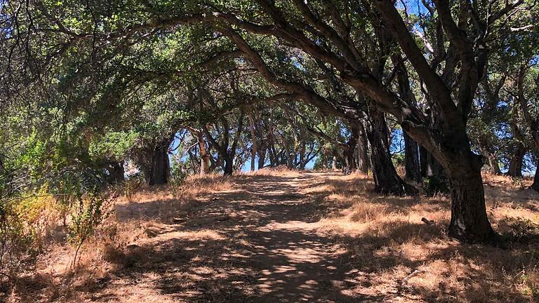 Picchetti Afternoon Hike - Zinfandel Trail