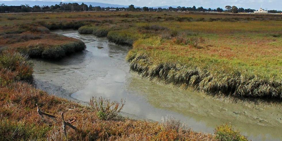 Exploring the Living Edge of the San Francisco Bay