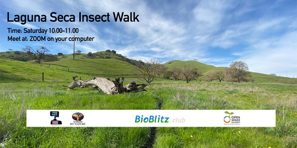 Laguna Seca Insect Walk