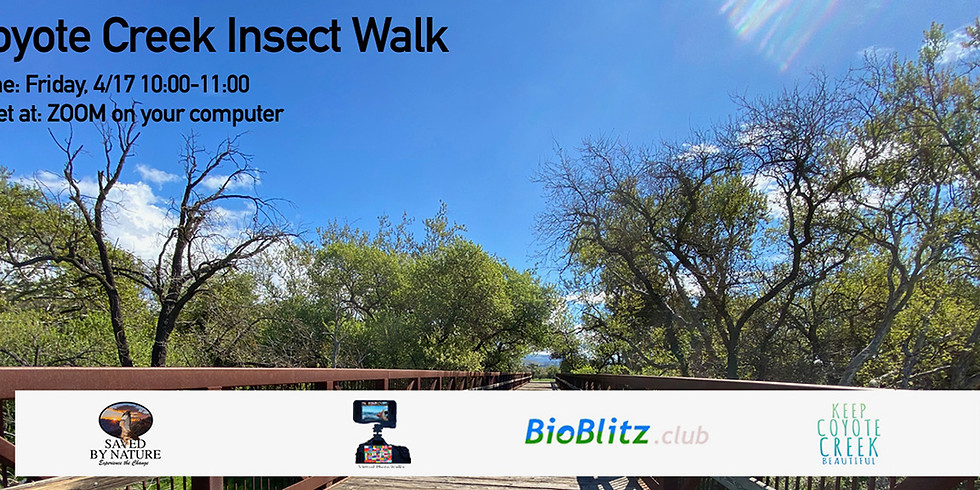 Coyote Creek Insect Walk