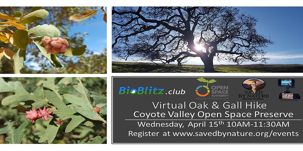 Virtual Gall and Oak Hike