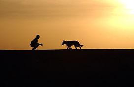 canine-dog-german-shepherd-38284.jpg