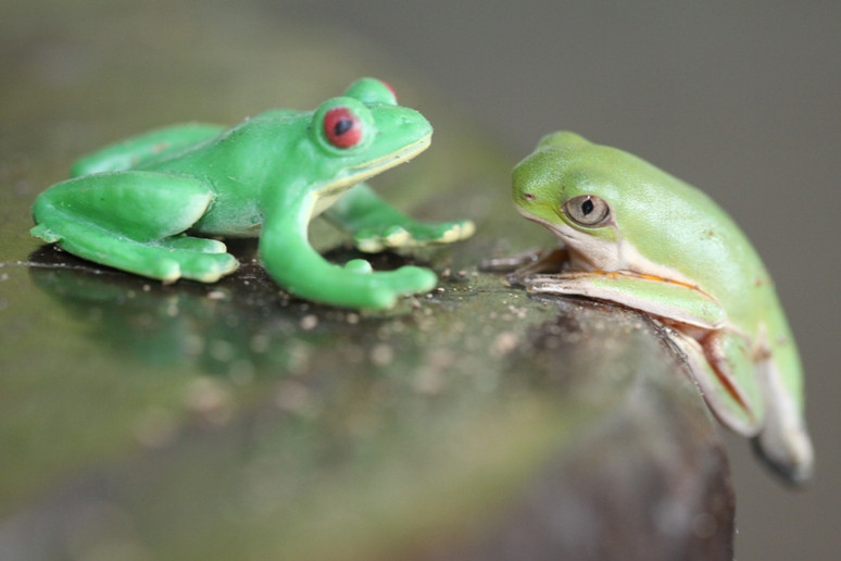 Tale of Two Frogs