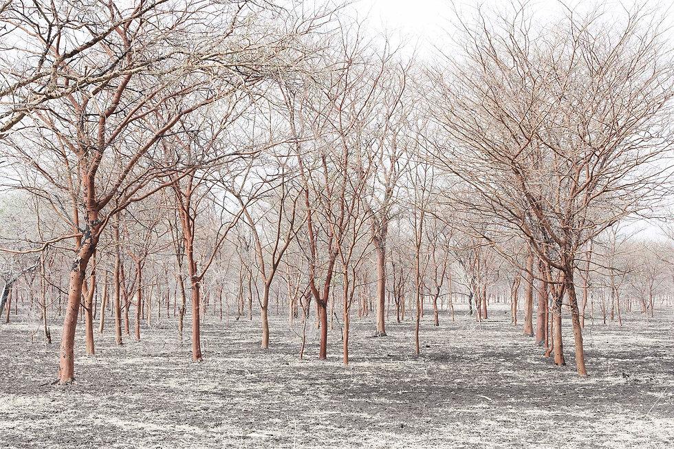Stefan-Schuetz-landscape017.jpg