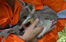 Fauna Spotter rescue