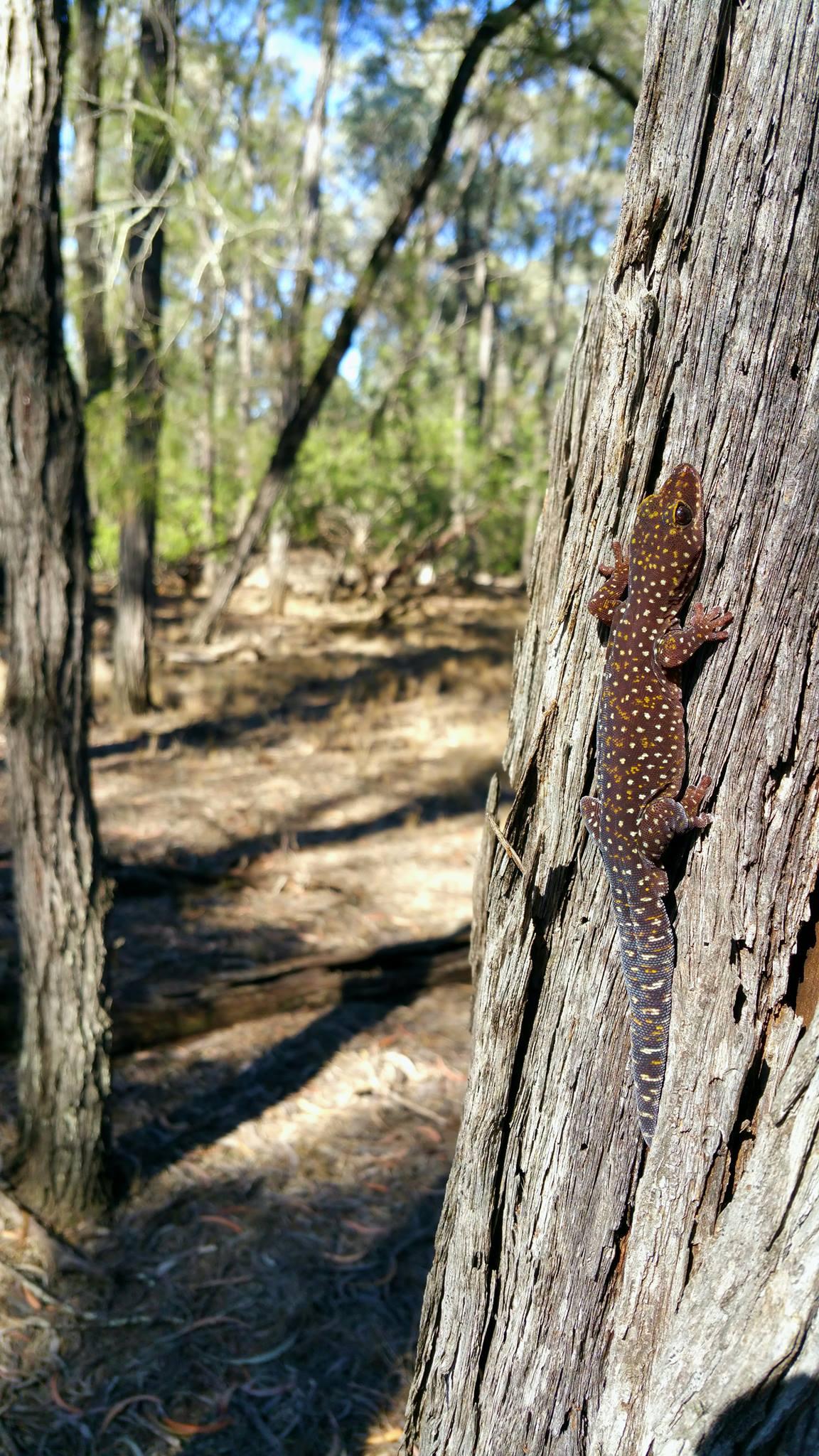 Fauna Spotting