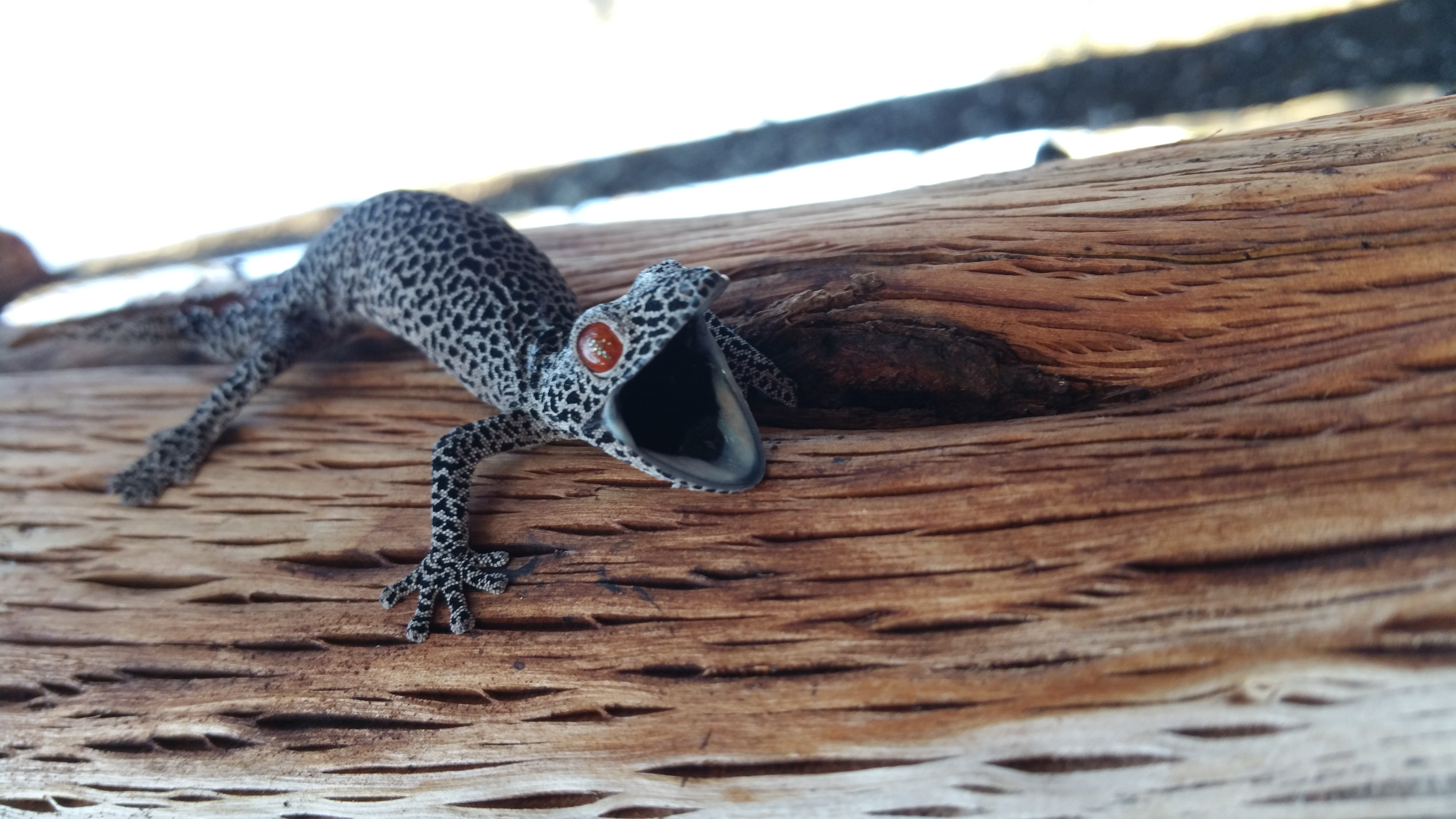 Fauna Spotter - EVNT