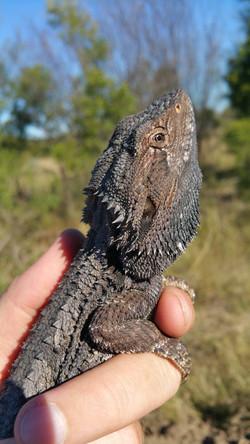 Australian Fauna Management Spotter