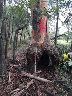 Fauna Spotter Habitat Tree