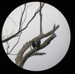 Fauna spotter scope