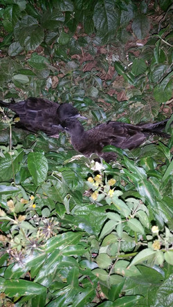 Fauna Spotter migratory birds