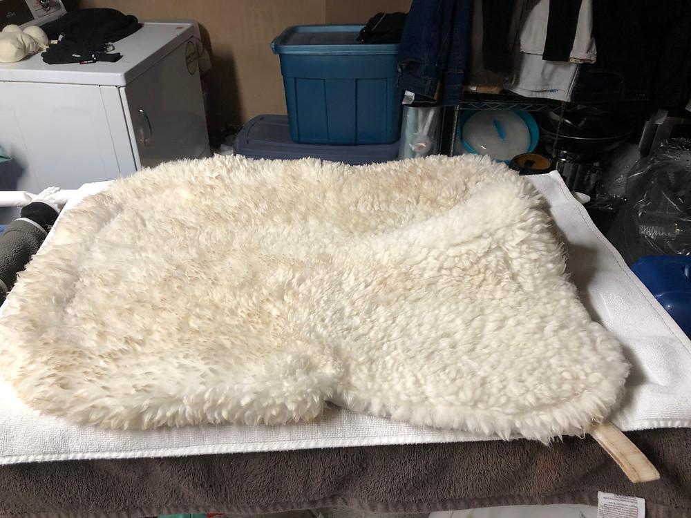 Drying a sheepskin saddle pad
