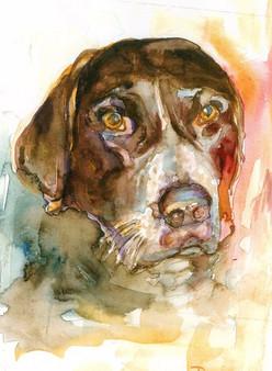 One Eared Dog