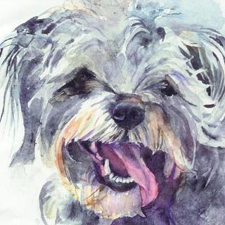 Gray Dog Portrait