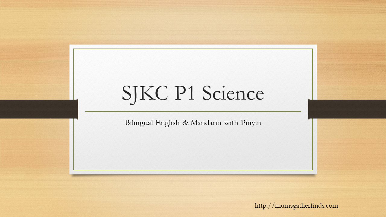 What Your Child Will Be Learning In SJKC P1 Science