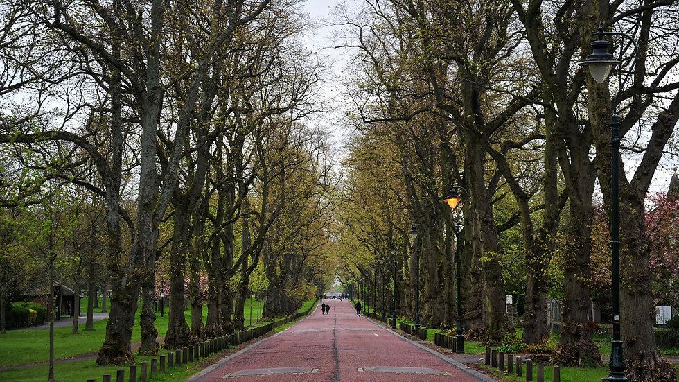 Moor Park Avenue