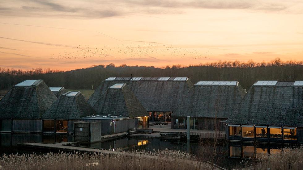 Brockholes Starlings at Sunset