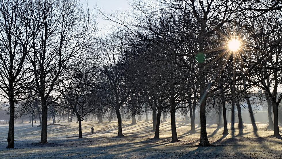 Moor Park Winter
