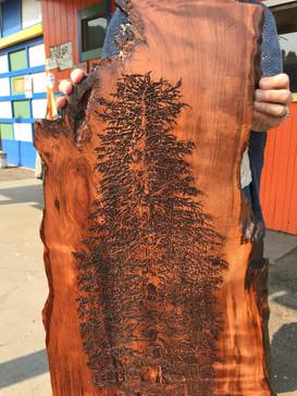 Laser Engraved Redwood Tree